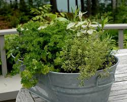 Easy Herbs To Grow Inside How To Get Sarted Growing Herbs In Pots