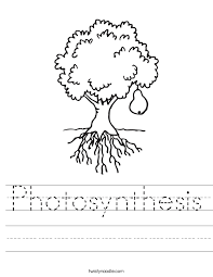 Photosynthesis Coloring Page Funycoloring Photosynthesis Coloring Page