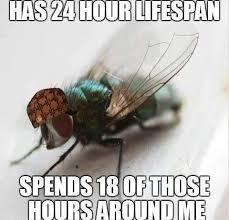 Fly Meme - annoying flies meme by pranoysantosh memedroid