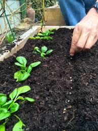 sourcing your own organic vegetable seeds u2014 portland edible