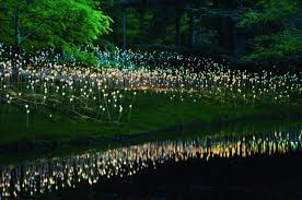 light artist bruce munro s light a collection of 10
