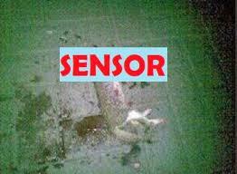 Astaghfirullah Meme - danang sutowijoyo bunuh kucing dan pamerkan fotonya via twitter