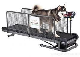 tappeti da corsa tapis roulant per cani elettrico magnetico ed acquatico