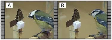 vital l full spectrum light for birds marginal eyespots on butterfly wings deflect bird attacks under low