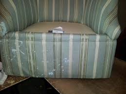 denver upholstery cleaning upholstery cleaning the clean team carpet cleaning denver
