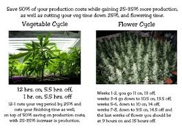 best light for weed seedlings cannabis light schedule best seed bank