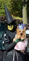 halloween costumes for yorkies dogs 190 best costumes images on pinterest