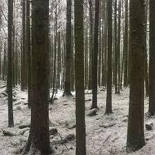 wild peternon peternonshoes wild winter