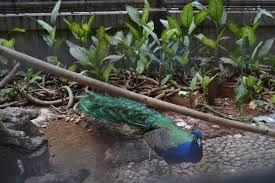 merak biru paket wisata lengkap di taman mini indonesia indah