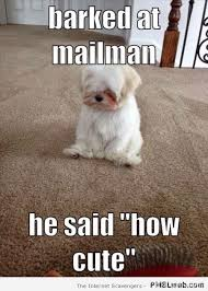First World Problem Meme - 41 dog first world problem meme pmslweb