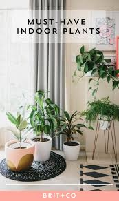 Best Indoor House Plants Awesome Cool Looking Office Plants Crazy Cool House Plants Office