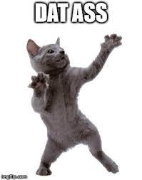 Dat Ass Cat Meme - happy dance cat imgflip