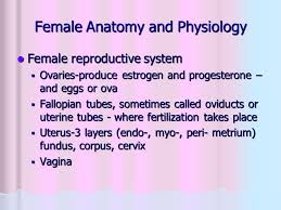 Anatomy And Physiology Place Maternal Child Health Nursing Module 1 Ppt Video Online Download