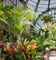 Balboa Park Botanical Gardens by Balboa Park Botanical Building With Orchids And Palm Trees And
