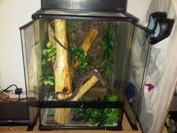 nw tree boa setup reptile forums