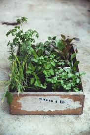 252 best gardening images on pinterest gardening plants and