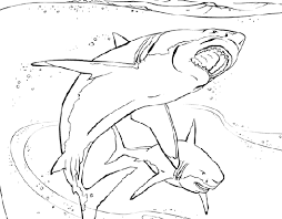 printable coloring pages shark coloringpagebook