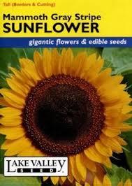sunflower seed packets thompson 6310 sunflower moonwalker seed
