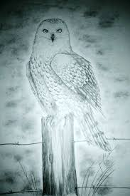 snowy owl drawing by forgottenhope547 on deviantart