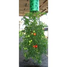 topsy turvy upside down tomato flower and vegetable planter the