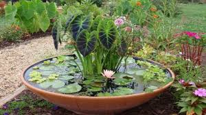 Zen Water Garden Water Container Garden Ideas Bathroomstall Org