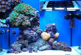 Zoanthid Reef Aquarium Care Lighting Aquarium Supplies Resources