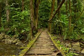 amazon rainforest packing list and essential information realwords amazon bridge rw