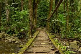 amazon rainforest packing list and essential information realwords amazon bridge rw