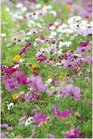 229 best in the meadow images on pinterest wild flowers spring