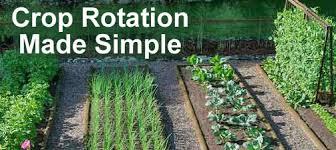about crop rotation in the vegetable garden wilson bros gardens