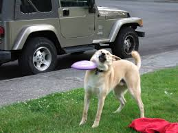 What Breed Is Doge Meme - internet bids sad farewell to frisbee doge a meme among canines