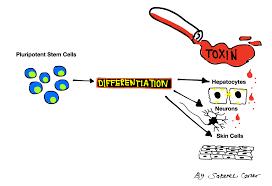 ma stem cell program blog