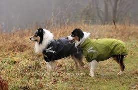 australian shepherd hashtags cross peak products outdoor dog gear u0026 dog supplies for active