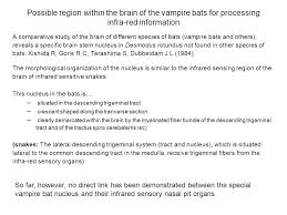 35 Red And Black Vampire by Thermoreception Some General Points Ppt Download