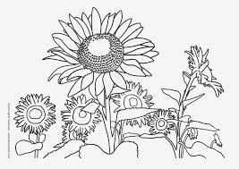 coloring sunflowers coloring pages
