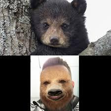 Meme Bear - create meme bear cub black bear bear pictures meme