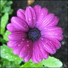 purple flower purple flower i by ydnew on deviantart
