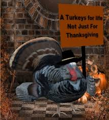 second marketplace animated thanksgiving protesting turkey