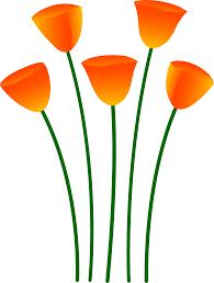 orange poppy flowers free clip art