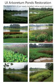 native pond plants the arboretum college of aces university of illinois