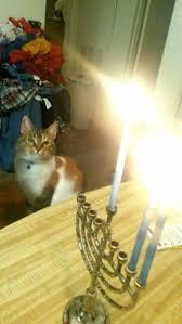 cat menorah health hazards for your cat