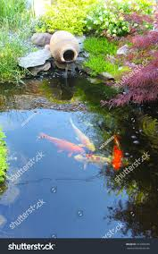 Decorative Pond Koi Fish Small Decorative Pond Stock Photo 213990745 Shutterstock