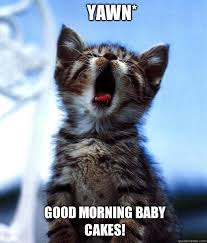 Sleepy Kitty Meme - good morning baby cakes yawn memes pinterest meme and memes