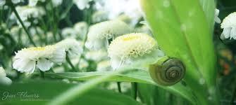 June Flowers - june flowers 11 by love1008 on deviantart
