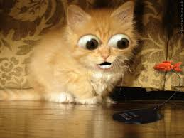 halloween kitten wallpaper best 20 funny cat wallpaper ideas on pinterest cat wallpaper