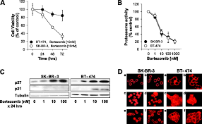 differential cellular and molecular effects of bortezomib a