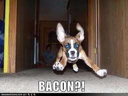 Dog Bacon Meme - southern funny dog funny best of the funny meme