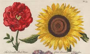 history botanical study ornamental garden