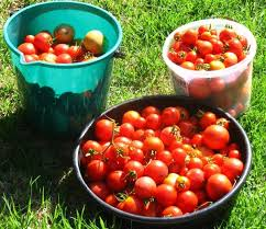 innovative watering vegetable garden reconfigurable vegetable