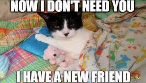Cute Funny Cat Memes - 10 funny cat memes 2015 cute cat pictures photos pics